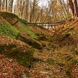 Ravine in the forest — Stock Photo #7510670