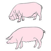 Pen drawing depicting a pig — Stock Photo