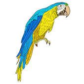 Macaws. Vector illustration. — Stock Photo