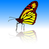 Beautiful tropical butterfly. Vector illustration. — Stock Photo