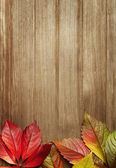 Autumn leaves with copy space — Stock Photo