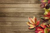 Autumn background — Photo