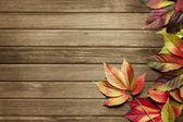 Podzimní pozadí — Stock fotografie