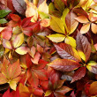 Colorful autumn leaves background — Stock Photo #7245331