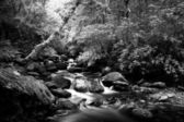 Forest with stream — Stock Photo