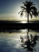 Palm tree at dawn or dusk reflected in the sea — Stock Photo