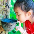 Stock Photo: Little girl near rubber tree