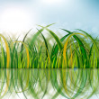 Green grass reflection — Stock Photo #7489445