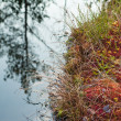 Autumn landscape on a bog - ストック写真