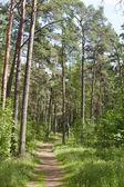Jarní dřevo — Stock fotografie