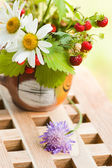 Camomile and wild strawberry — Stock Photo