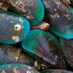 Sea mussel — Stock Photo #6763069