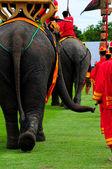 Buttock of elephants — Foto de Stock