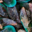 Sea mussel — Stock Photo