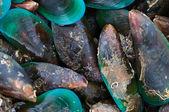 Sea mussel — Stock Photo