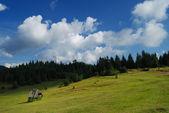 Campo e céu — Fotografia Stock