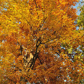 Colors of fall leaves — Stock Photo