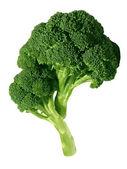 Verse broccoli, geïsoleerd op wit — Stockfoto
