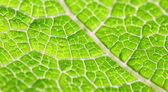Macro de folha verde — Fotografia Stock
