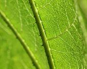 Macro of green leaf — Stock Photo