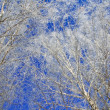Photo: Winter with snow trees