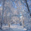 Winter landscape with snow trees — Stock Photo