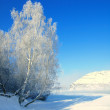 Winter landscape with snow tree and river in mountains — Stock Photo