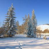 Winterlandschap met sneeuw bomen — Stockfoto