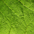 Stock Photo: Macro of green leaf