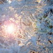 Royalty-Free Stock Photo: Snowbound winter forest in a rays of the sun