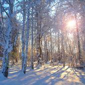 冬の森の朝の太陽. — ストック写真