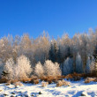 Photo: Winter landscape with snow trees