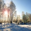 Stock Photo: Winter landscape with morning sun and snow trees in countryside.
