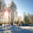 Stock Photo: Winter landscape with morning sun and snow trees in the countryside.