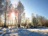 Winterlandschap met ochtend zon en sneeuw bomen op het platteland. — Stockfoto