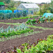 Stock Photo: Allotments prepared