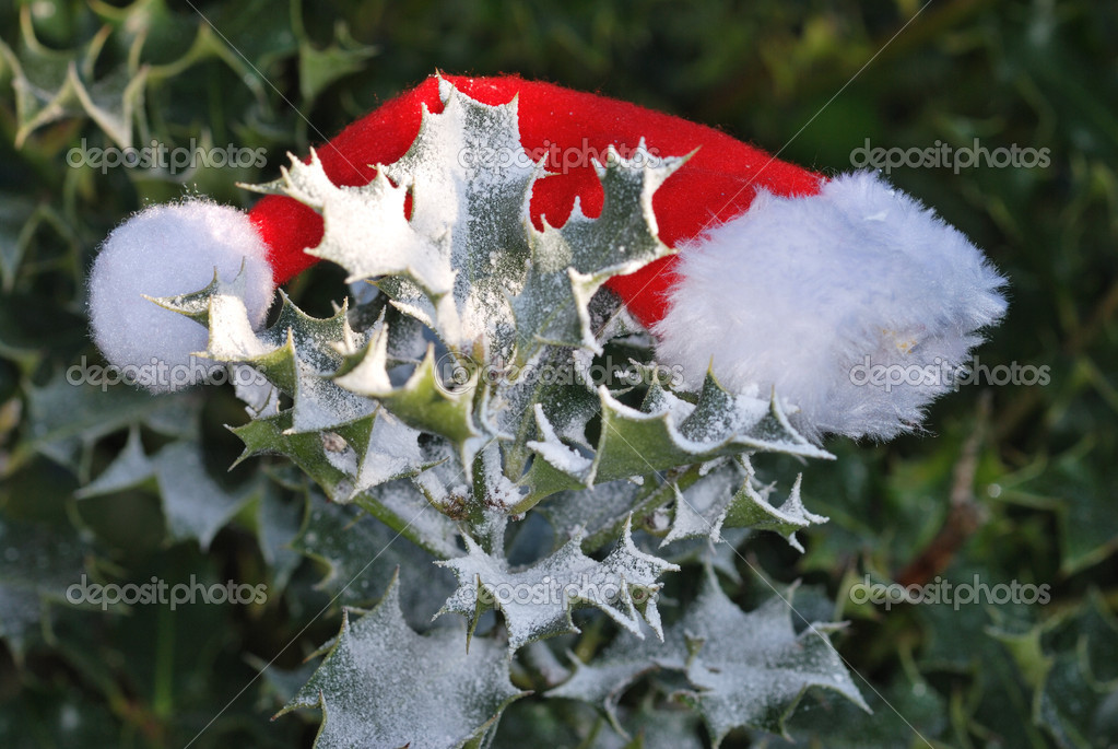 Santa hat lost in holly — Stock Photo #7238428