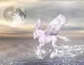 Enchanted pegasus — Stock Photo