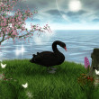 Black swan — Stock Photo #7394564