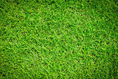 Green grass texture — Stockfoto