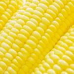 Corn Cobs — Stock Photo #7727335