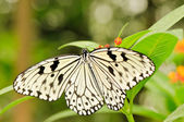 Tropical butterfly on plant — Stock Photo