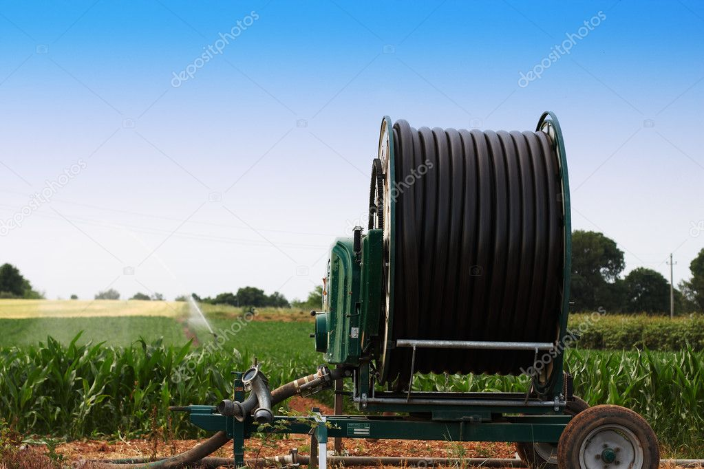 Farmland irrigation on a crop of sweetcorn plants — Stock Photo #7007933