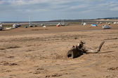 Drift wood on the sand — Stock Photo