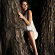 Womand tree — Stock Photo #6823561