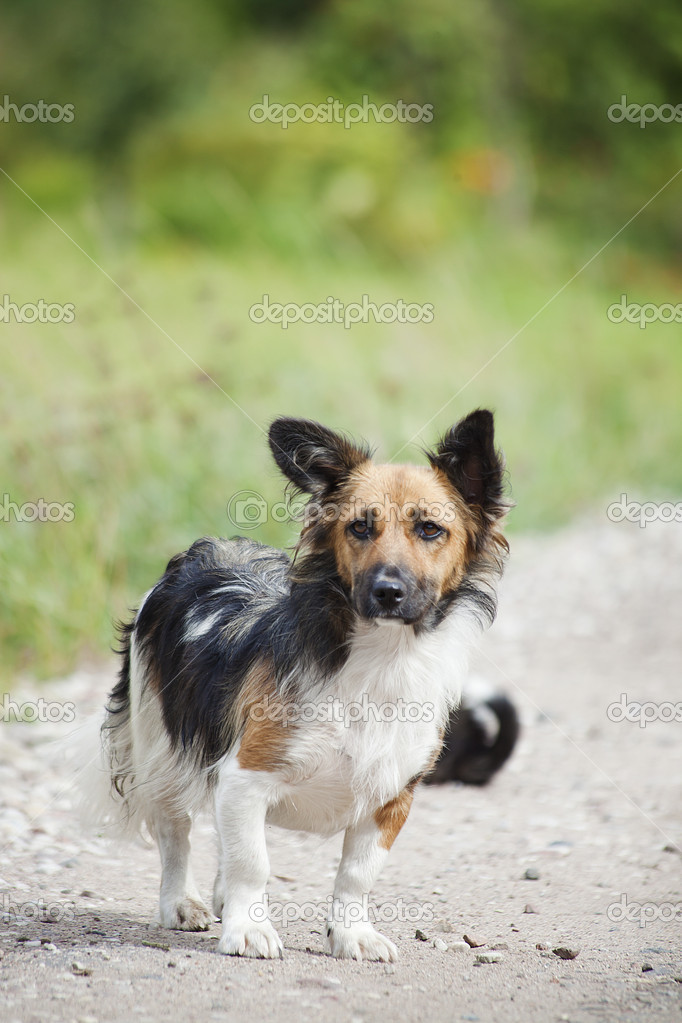 A small and sad homeless dog on the path  Stock Photo #6891746