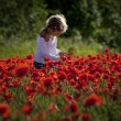Girl on a poppy field — Stock Photo