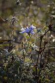Blue flower — Foto de Stock