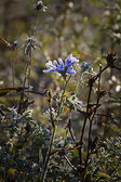Blue flower — Fotografia Stock