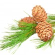 Stock Photo: Conifer branch with pine cones